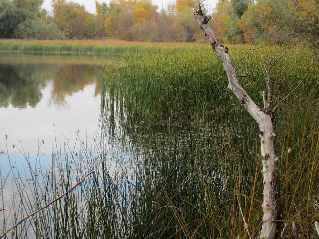 голавль ранней весной на поплавочную удочку видео